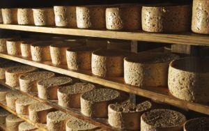 Quesos en proceso de fermentación en una cueva de la villa de Tielve de Cabrales (Asturias). / GONZALO AZUMENDI